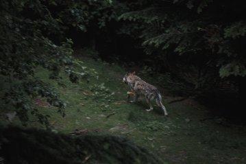 france-Guyane-ecotourisme-faune